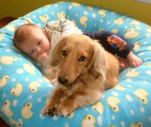 Взаимодействие с зараженными животными