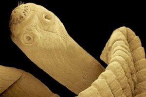 Протяженность жизни червя может достигать 20 лет