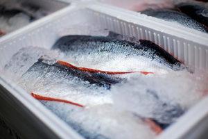 Замораживание рыбы