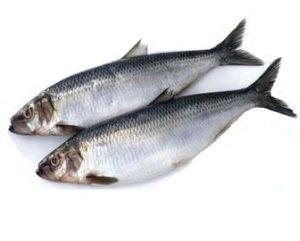 не соленая рыба