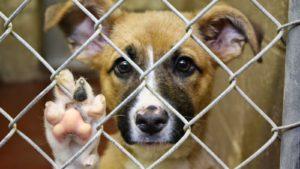 контроль над бездомными животными
