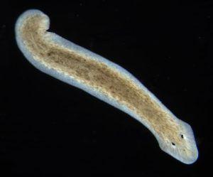 разделение паразитов по действию на организм хозяина