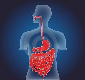 Нормализация микрофлоры кишечника
