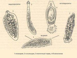 Разнообразие паразитов в человеческом организме