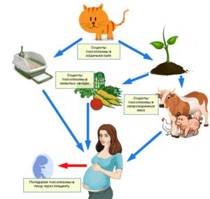 причины токсоплазмоза